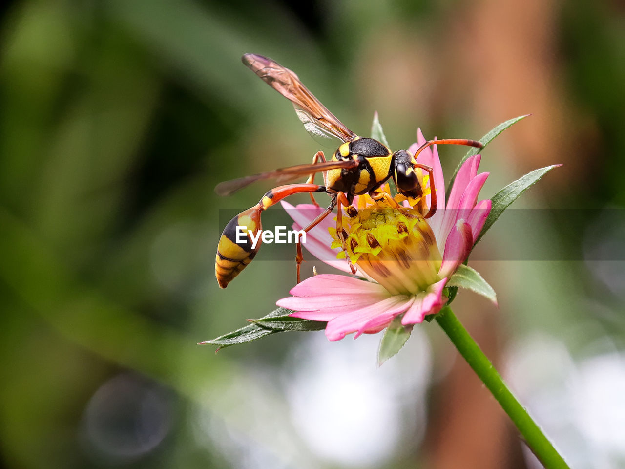 invertebrate, insect, flowering plant, animal themes, flower, animal wildlife, animals in the wild, animal, one animal, beauty in nature, fragility, plant, vulnerability, petal, freshness, close-up, flower head, growth, pollination, focus on foreground, no people, animal wing, pollen, butterfly - insect