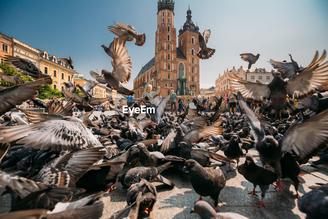 bird, vertebrate, architecture, animal themes, animal, large group of animals, animal wildlife, animals in the wild, group of animals, building exterior, built structure, day, city, flying, flock of birds, nature, pigeon, sky, belief, religion, no people