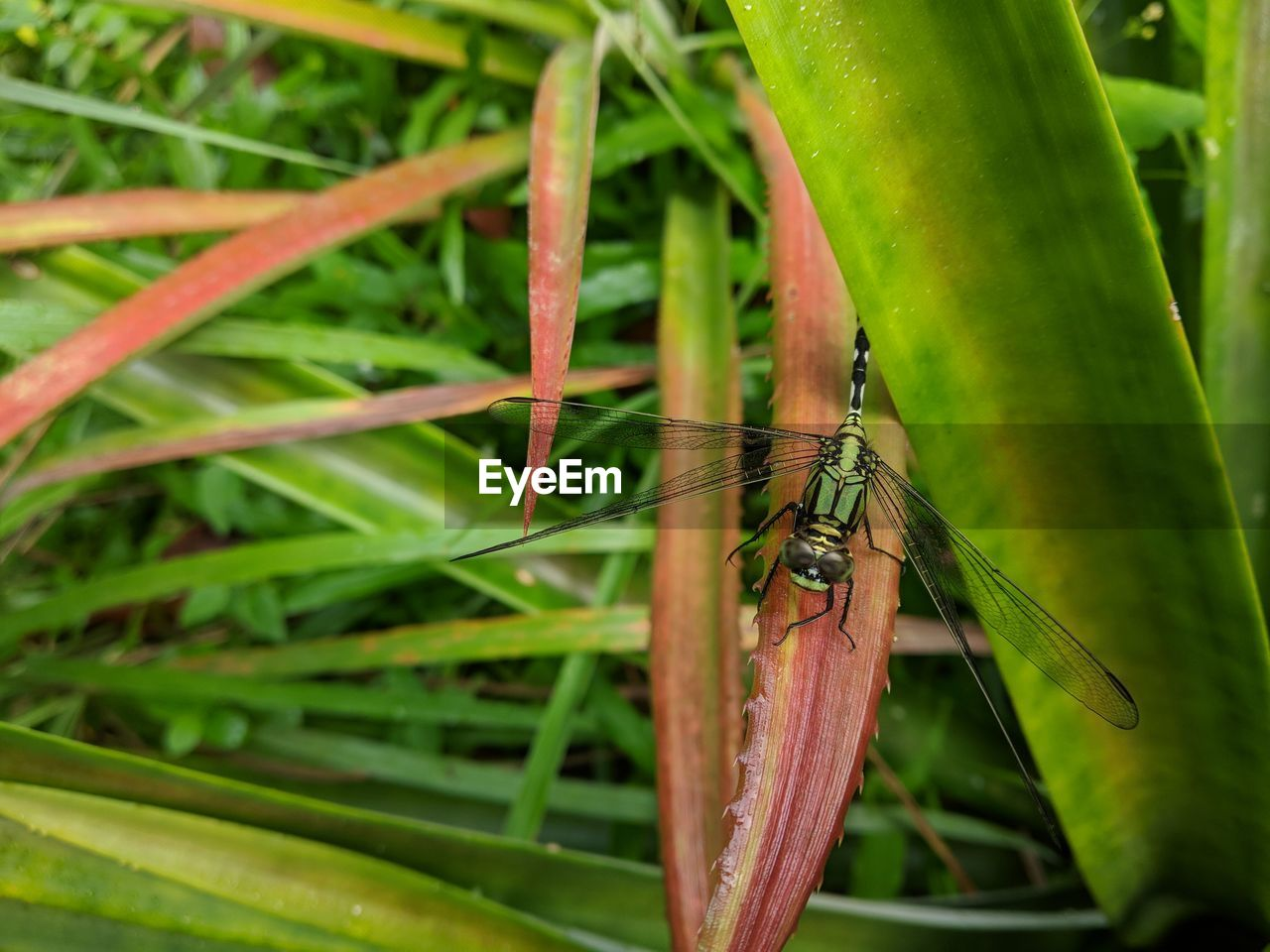 animal wildlife, insect, animals in the wild, invertebrate, animal themes, one animal, animal, green color, plant, close-up, plant part, focus on foreground, leaf, growth, nature, day, no people, animal wing, beauty in nature, outdoors, blade of grass
