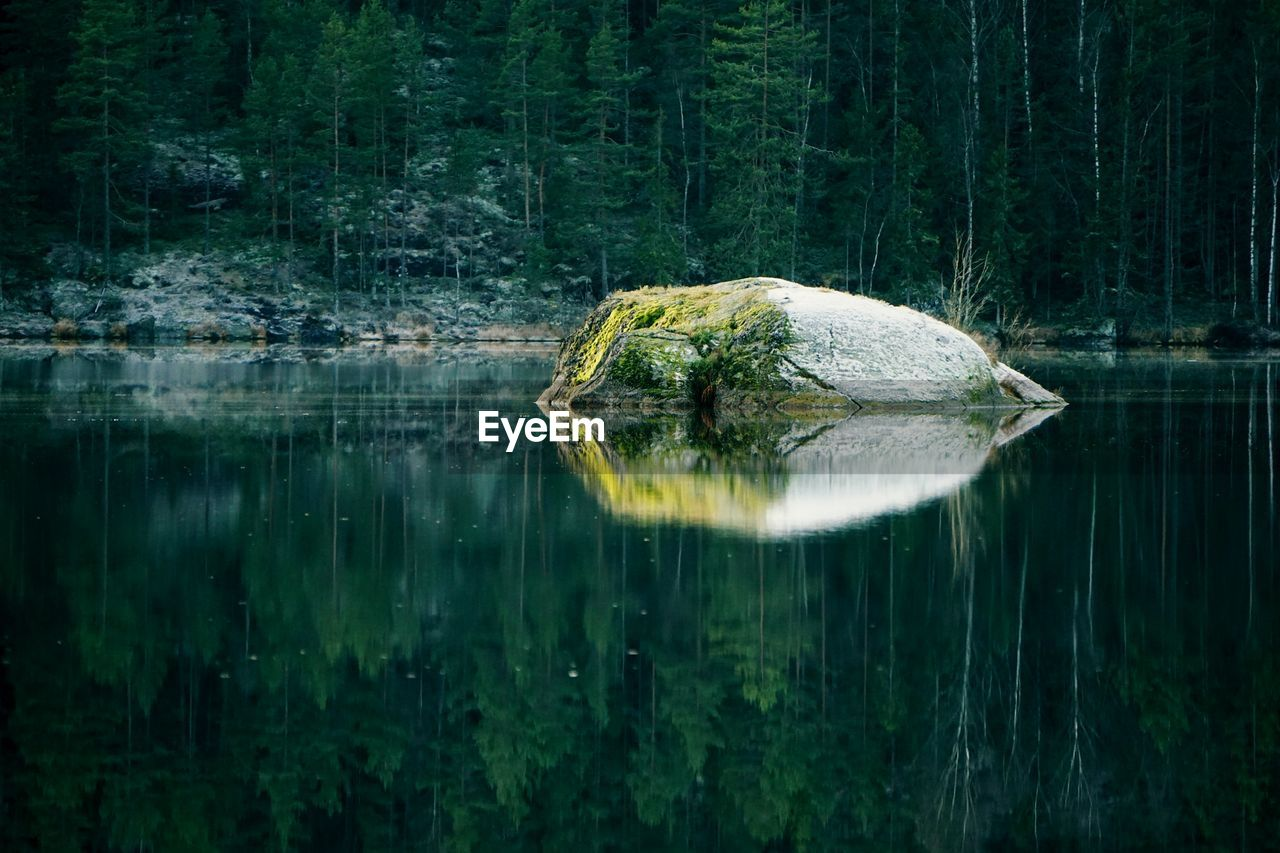Scenic View Of Rock In Lake Against Trees In Forest
