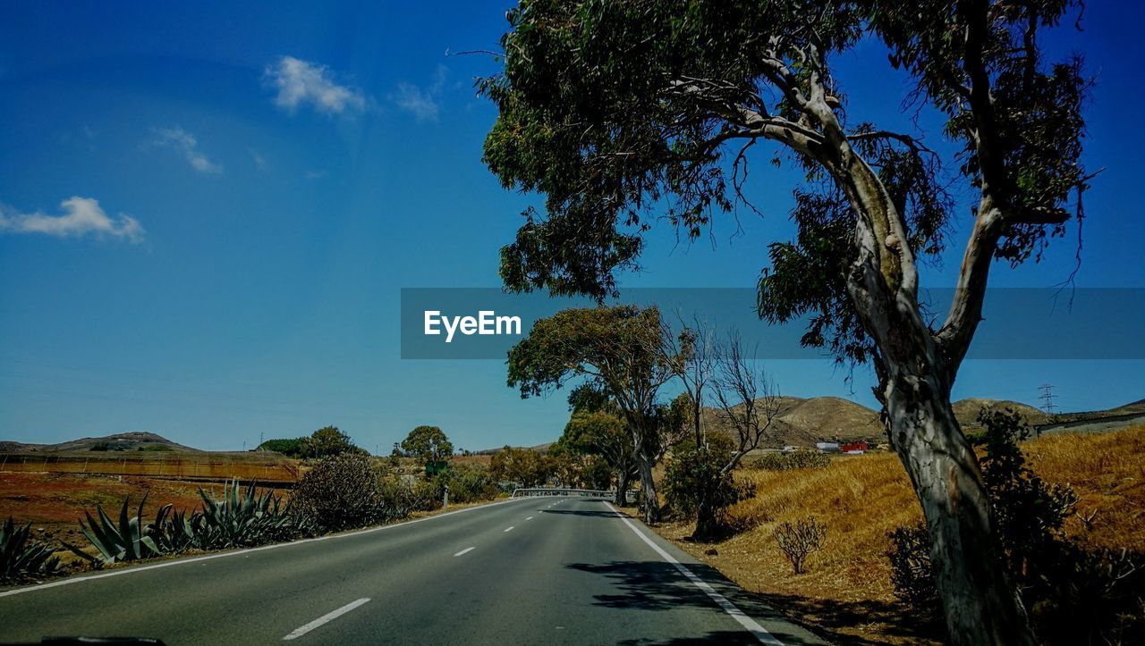 tree, sky, transportation, road, plant, the way forward, direction, nature, sign, no people, day, symbol, diminishing perspective, blue, road marking, sunlight, landscape, cloud - sky, marking, car, outdoors, dividing line