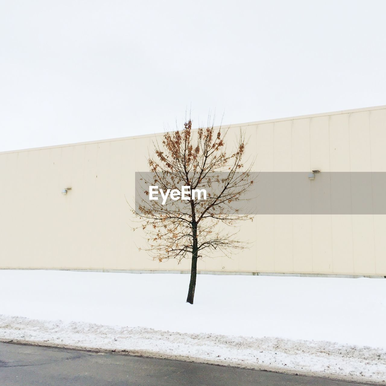 Bare Tree On Snow Covered Landscape Against Clear Sky