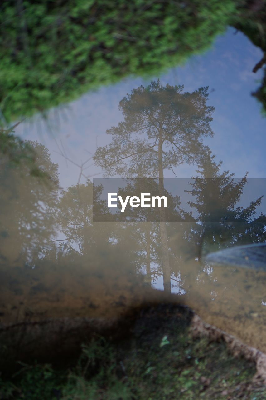 plant, tree, nature, water, tranquility, growth, no people, beauty in nature, land, sky, field, day, tranquil scene, outdoors, branch, lake, scenics - nature, non-urban scene, environment