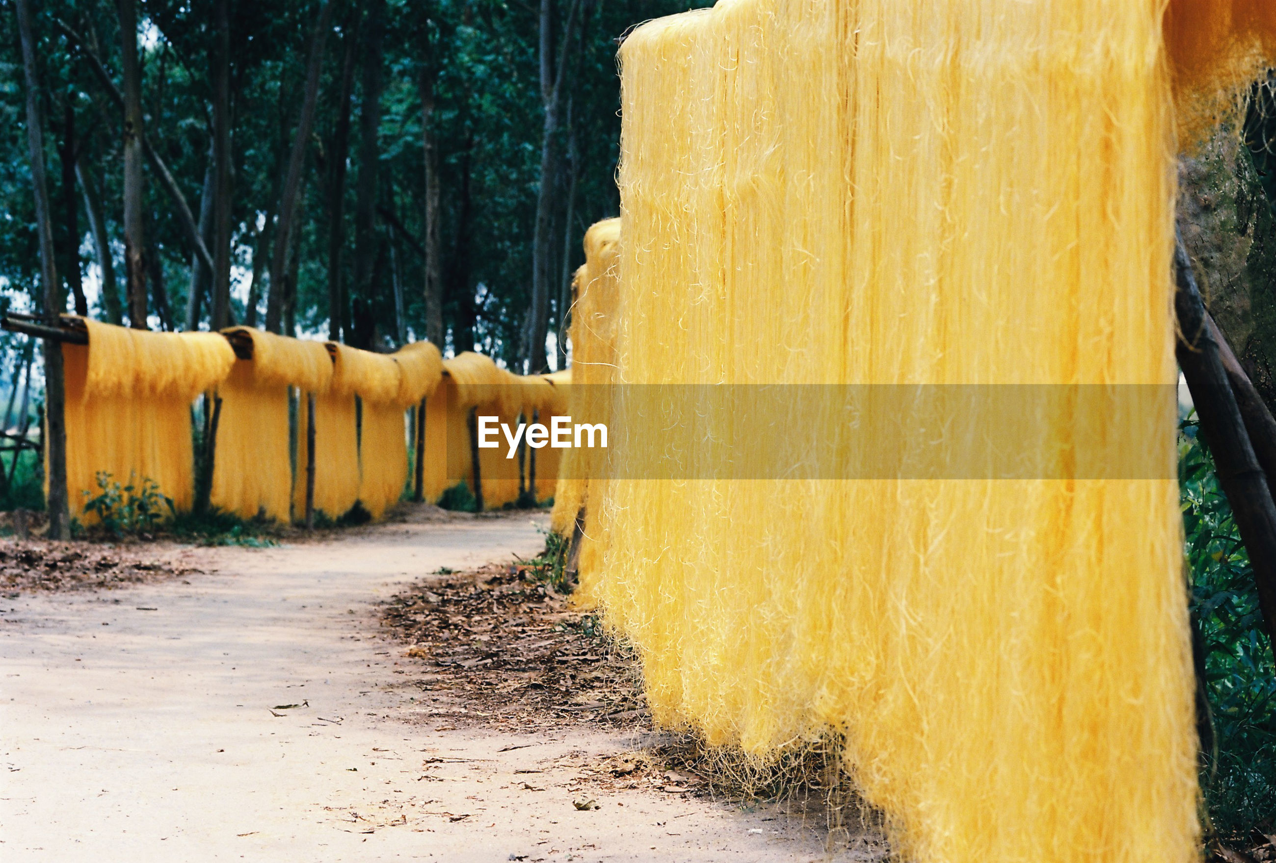 Yellow objects drying against trees