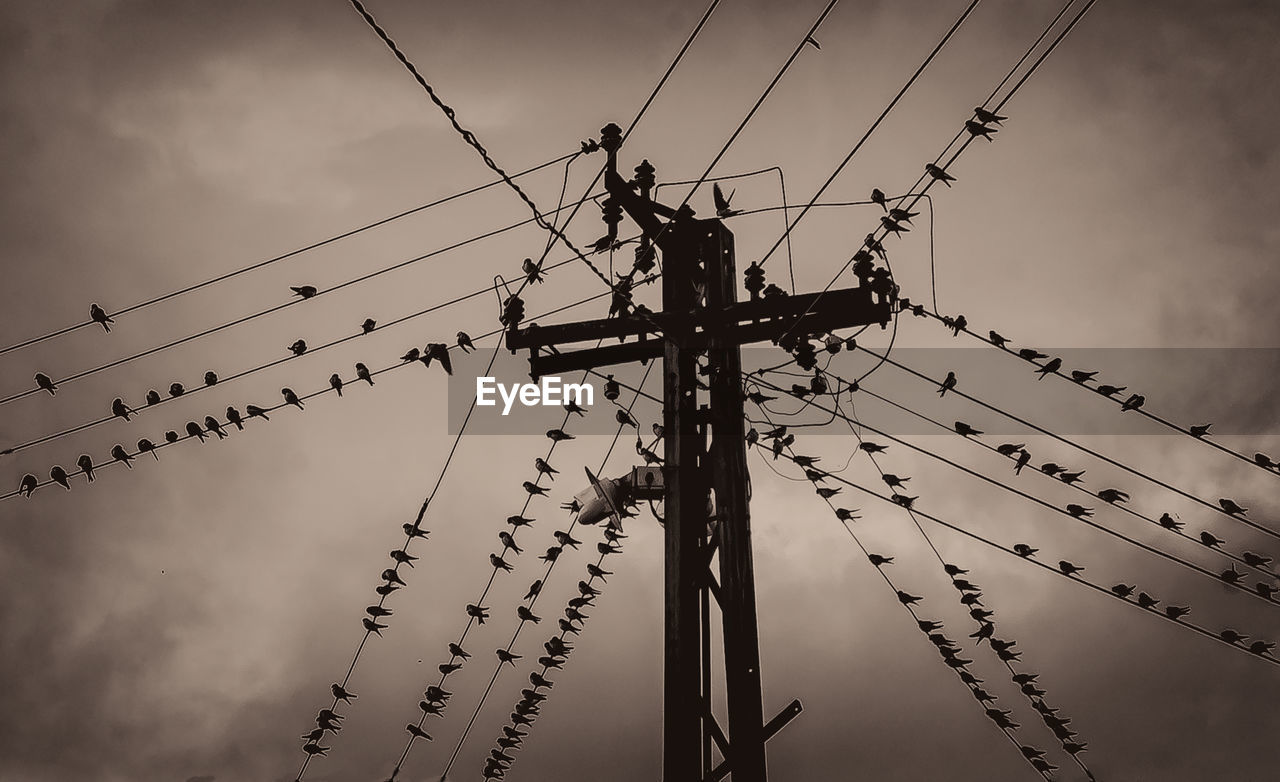 LOW ANGLE VIEW OF SILHOUETTE BIRDS ON ELECTRICITY PYLON