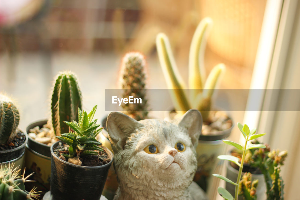 mammal, animal, plant, animal themes, potted plant, domestic, growth, no people, one animal, nature, pets, domestic animals, succulent plant, focus on foreground, day, close-up, vertebrate, indoors, cactus, domestic cat, houseplant, animal head