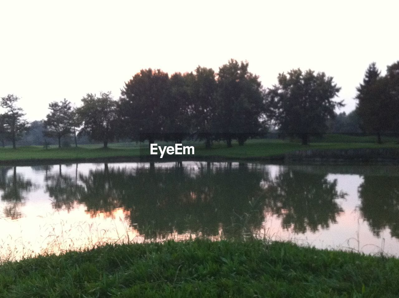 plant, grass, water, reflection, tree, tranquility, lake, tranquil scene, scenics - nature, nature, beauty in nature, sky, growth, no people, landscape, field, non-urban scene, day, green color, outdoors