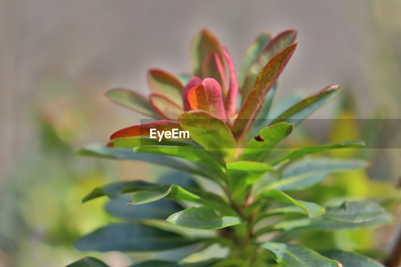 growth, plant, beauty in nature, plant part, close-up, leaf, nature, no people, day, freshness, green color, selective focus, focus on foreground, vulnerability, outdoors, fragility, flower, tranquility, petal, flowering plant, flower head