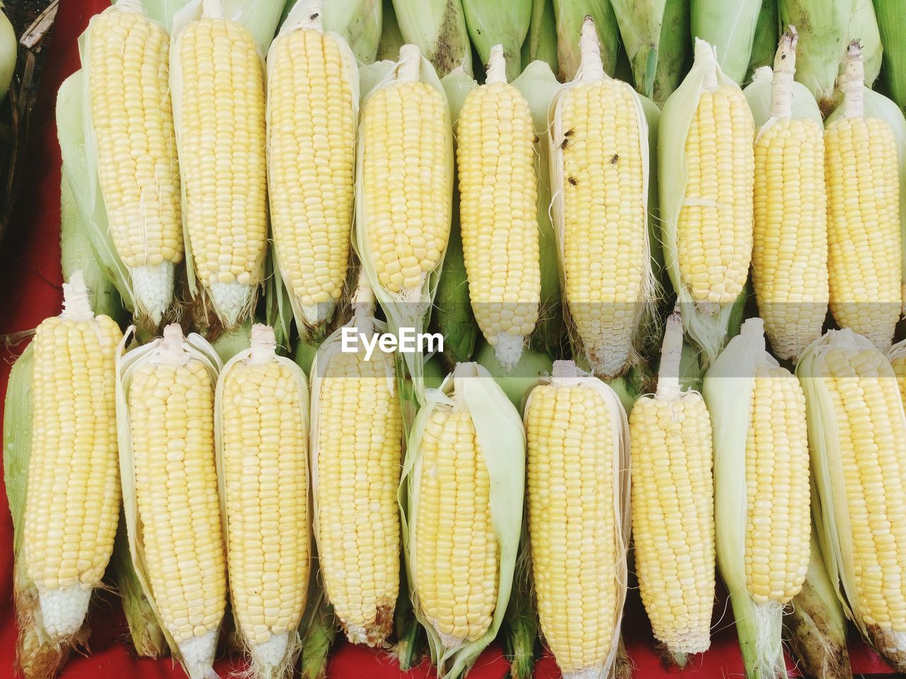Close-Up Of Sweet Corn
