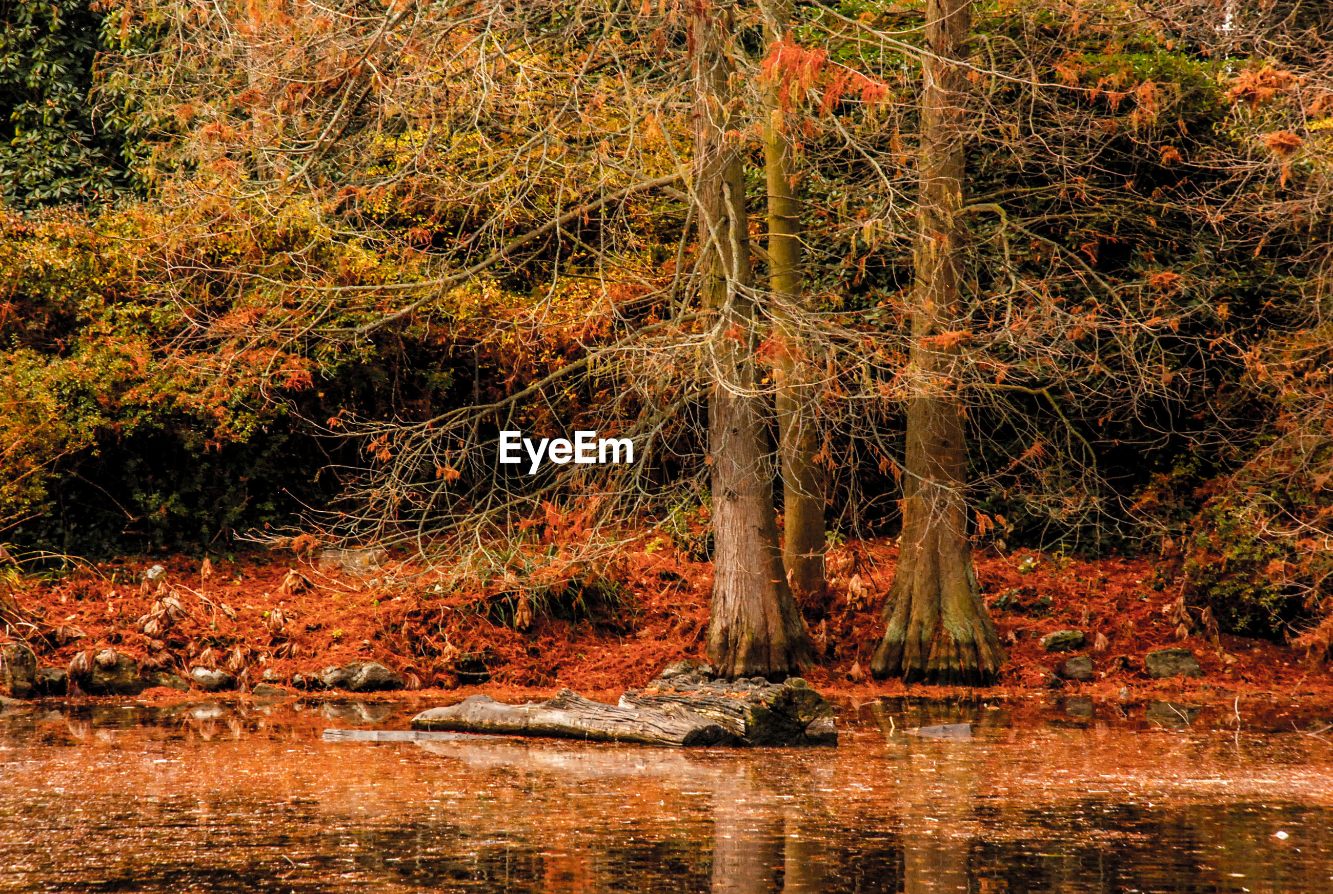 Bare trees on field by lake during autumn
