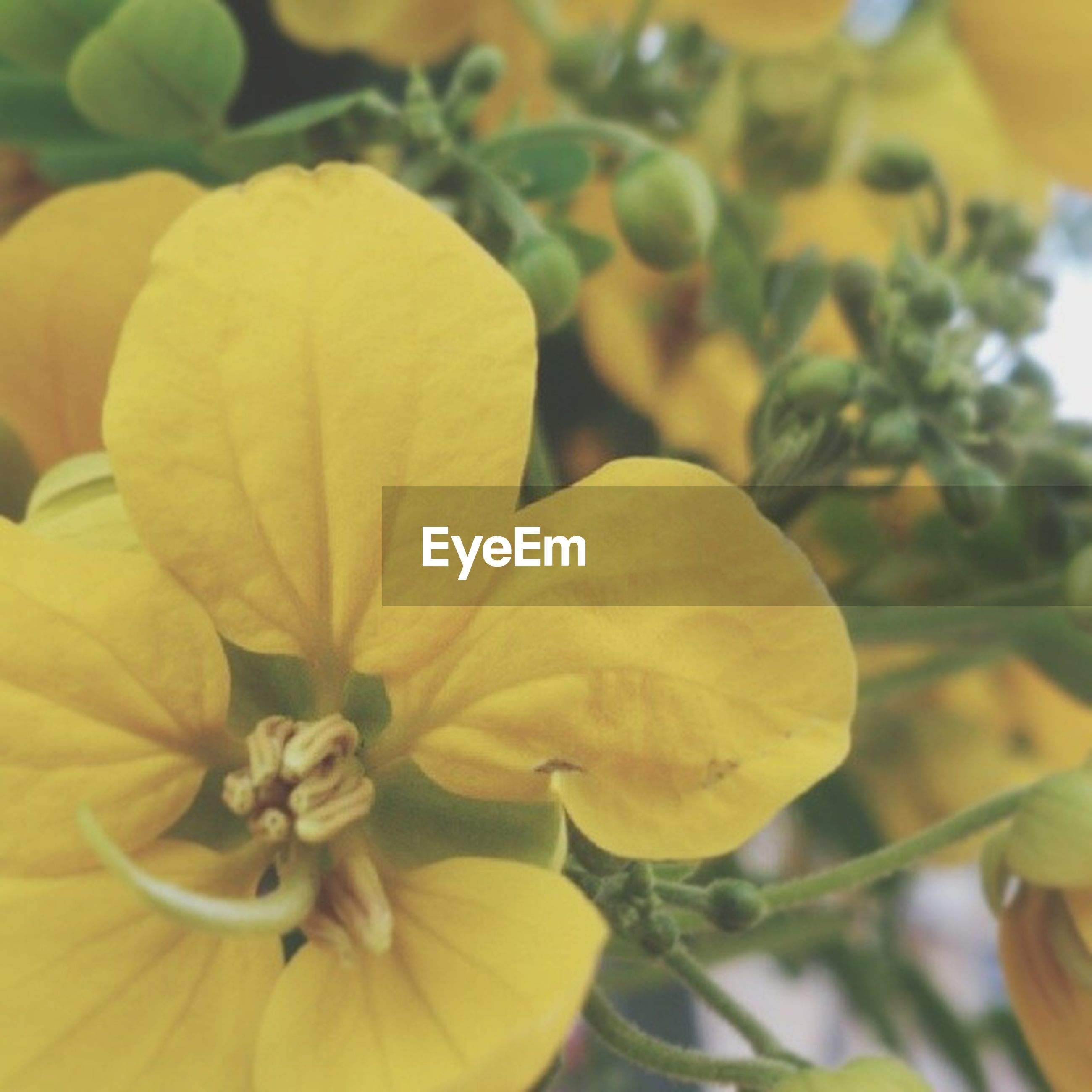 flower, yellow, petal, freshness, fragility, growth, flower head, beauty in nature, focus on foreground, close-up, nature, blooming, plant, in bloom, leaf, park - man made space, day, outdoors, no people, blossom