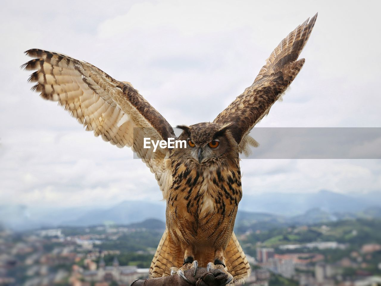 Close-Up Of Portrait Of Eagle Owl Flying Against Cloudy Sky