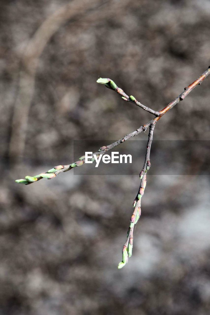 nature, outdoors, day, focus on foreground, twig, no people, close-up, plant, growth, fragility, beauty in nature