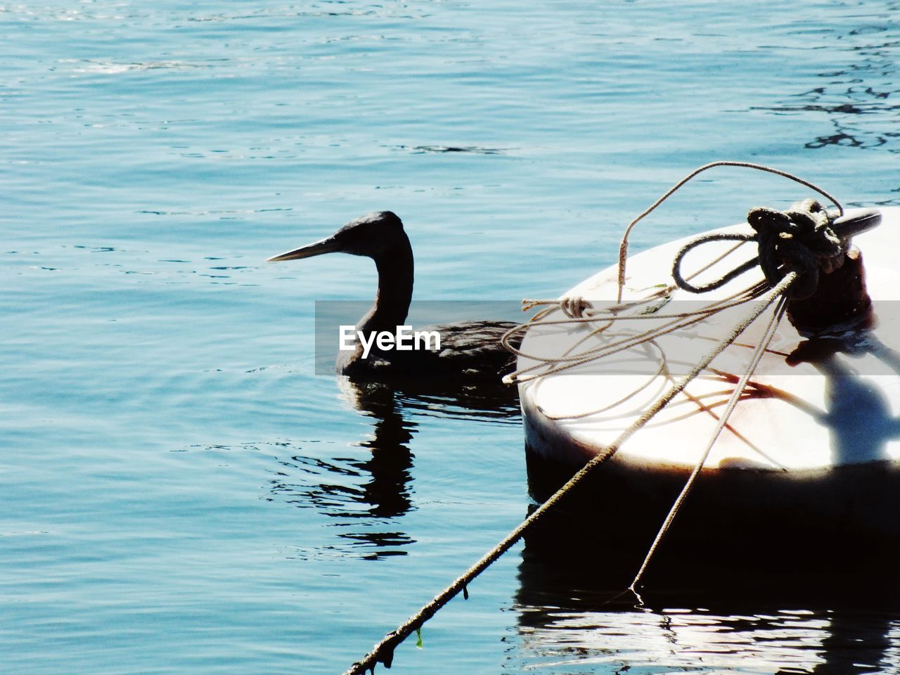 water, animal themes, nature, animals in the wild, no people, bird, outdoors, lake, one animal, day, beauty in nature, animal wildlife, nautical vessel, swan, swimming