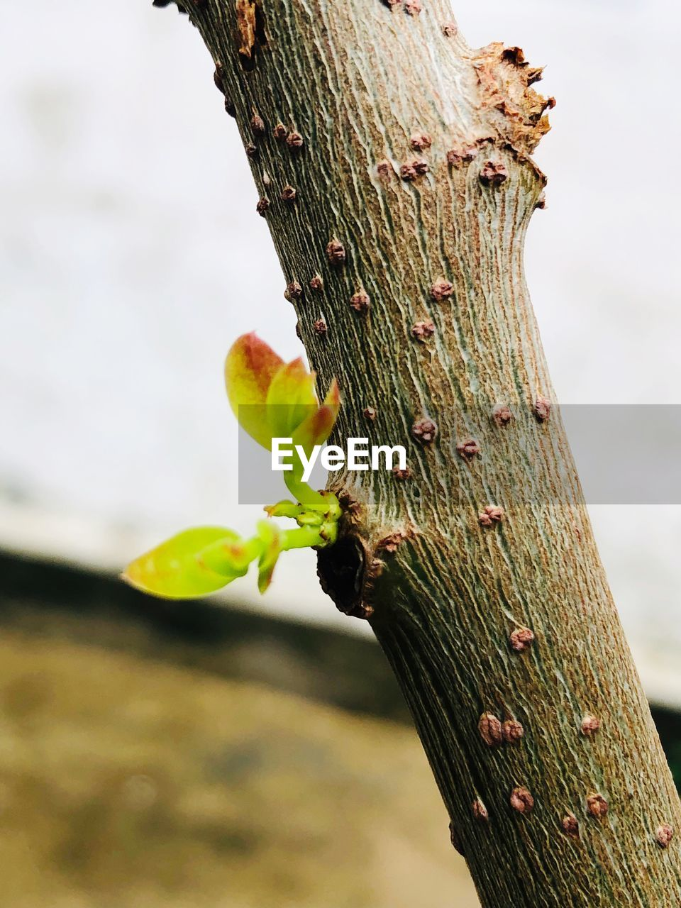 plant, focus on foreground, growth, trunk, tree trunk, nature, close-up, tree, day, no people, wood - material, outdoors, textured, green color, beauty in nature, tranquility, animals in the wild, vulnerability, animal, fragility, bark