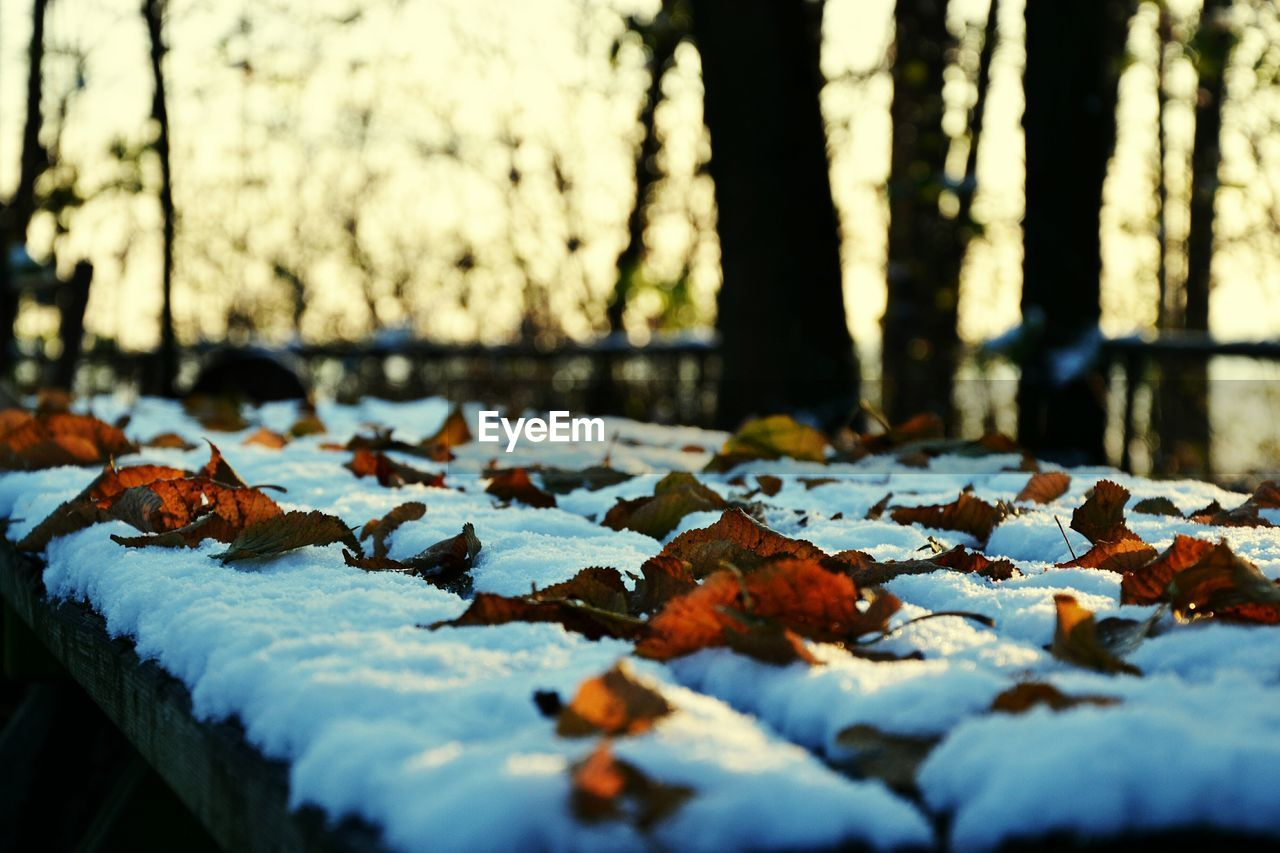 nature, leaf, no people, day, change, autumn, outdoors, close-up, cold temperature, tree, water, beauty in nature, animal themes