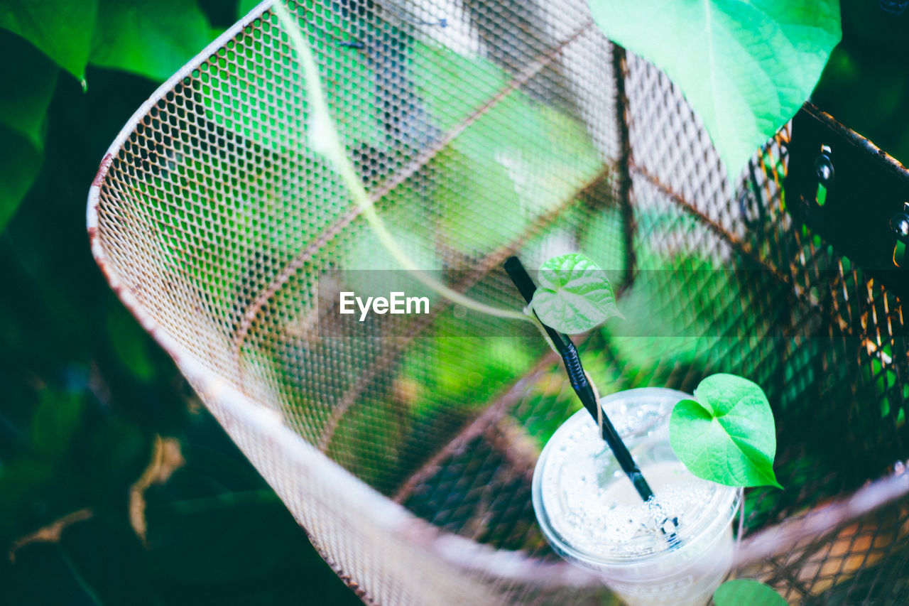 View Of Plastic Glass With Straw And Creeper Plant