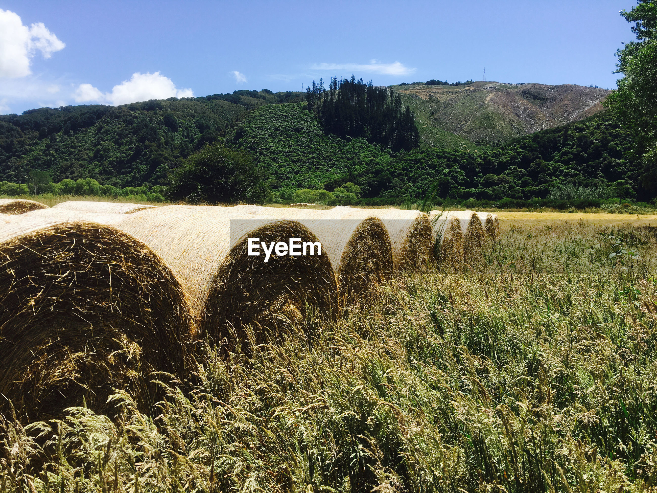 Scenic view of hay bales on field against sky