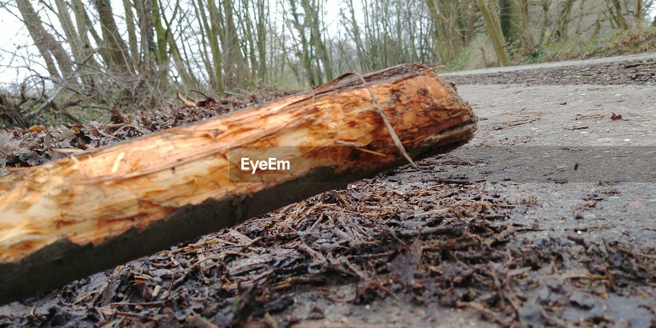 nature, forest, tree trunk, day, outdoors, no people, deforestation, tree, close-up