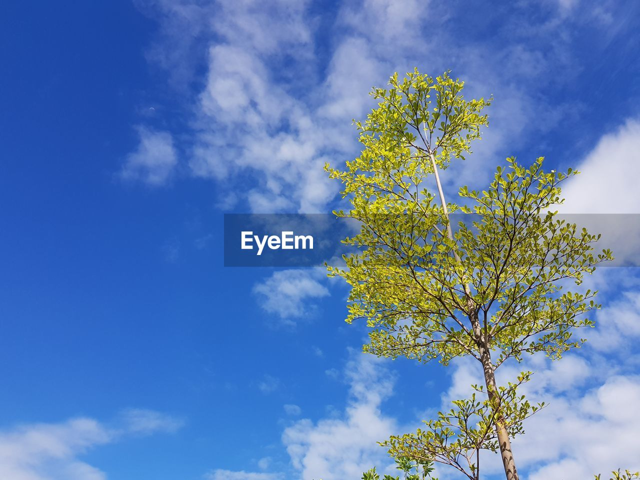 cloud - sky, sky, plant, beauty in nature, flower, growth, nature, low angle view, flowering plant, day, tree, blue, no people, tranquility, freshness, fragility, vulnerability, outdoors, yellow, branch, springtime