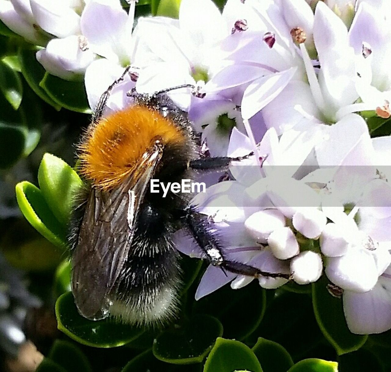 one animal, flower, insect, animal themes, animals in the wild, nature, growth, fragility, petal, day, no people, beauty in nature, freshness, close-up, plant, outdoors, flower head, pollination