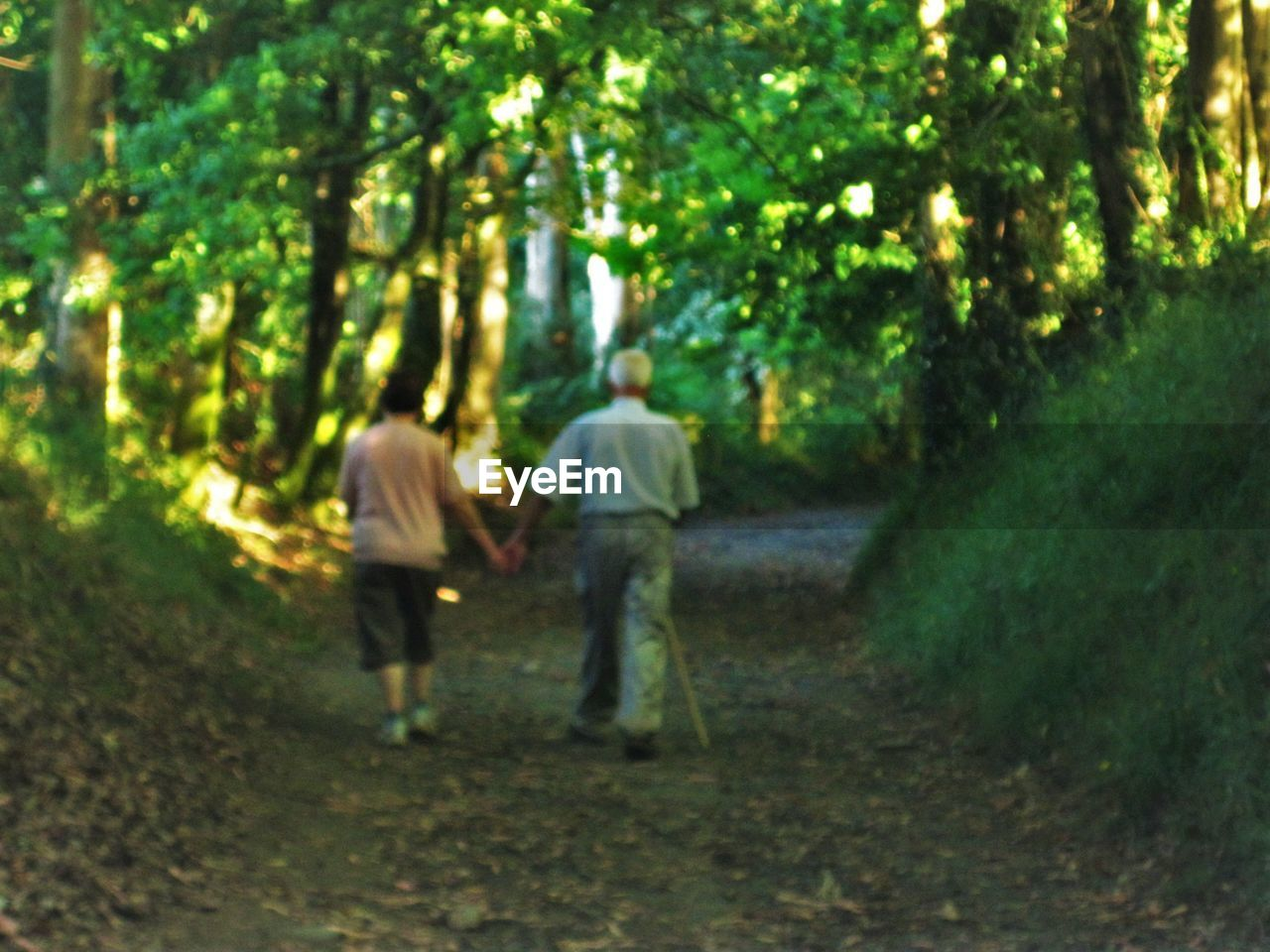 tree, two people, rear view, walking, nature, togetherness, forest, growth, real people, full length, men, love, leisure activity, tree trunk, outdoors, day, childhood, branch, women, bonding, beauty in nature, people, adult