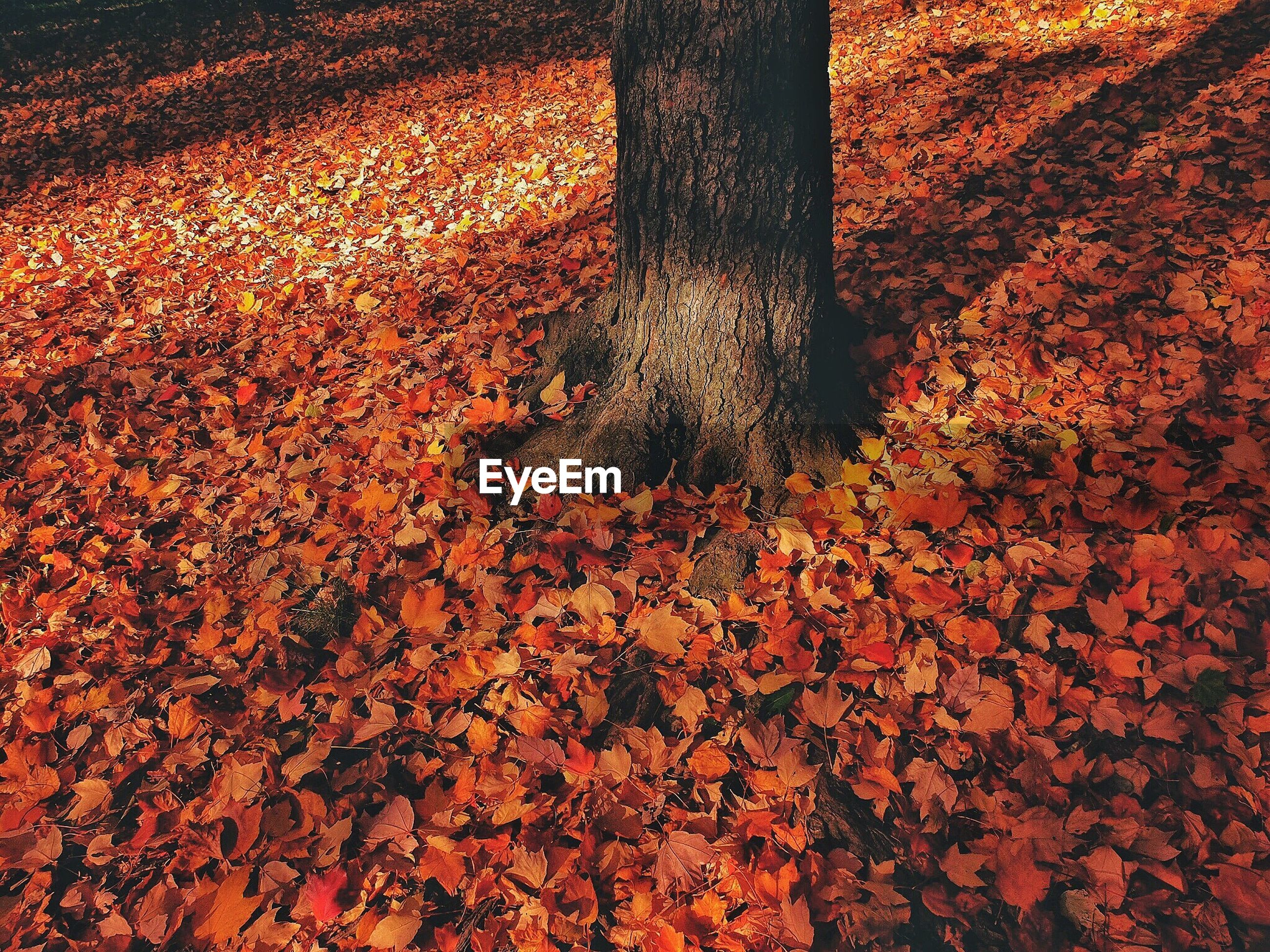 High angle view of autumn leaves fallen on field