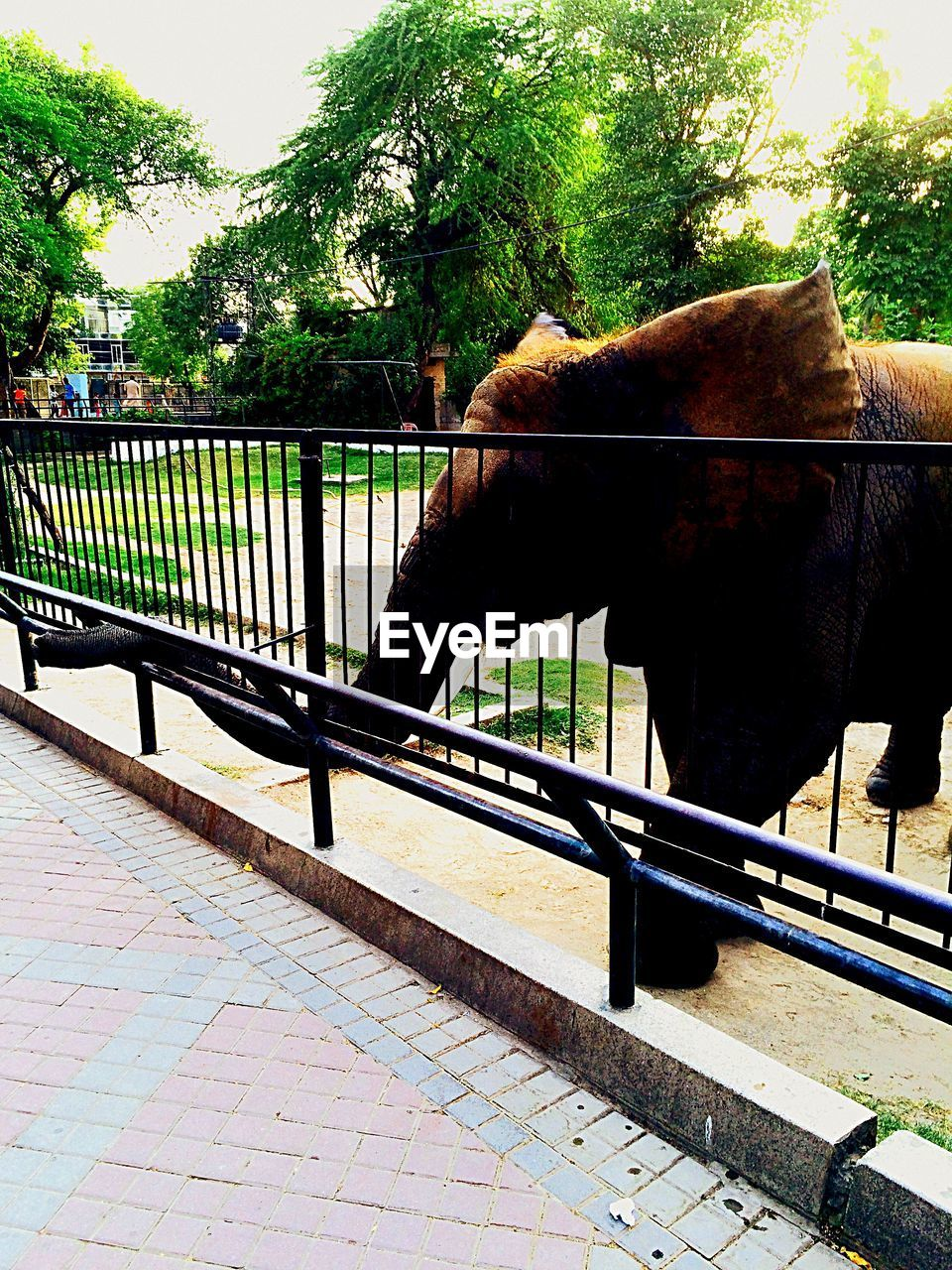 one animal, railing, animal themes, domestic animals, tree, mammal, day, no people, outdoors, standing, nature