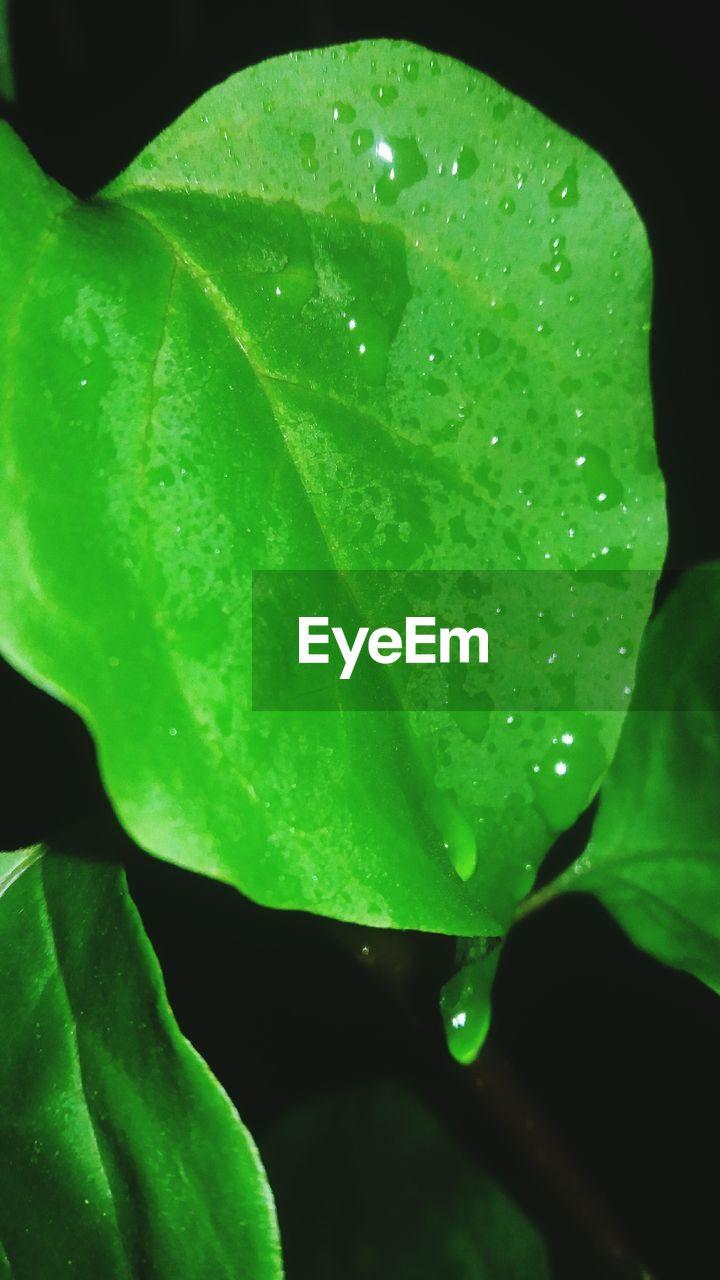 drop, leaf, water, wet, green color, growth, freshness, nature, close-up, raindrop, droplet, fragility, no people, beauty in nature, day, plant, outdoors