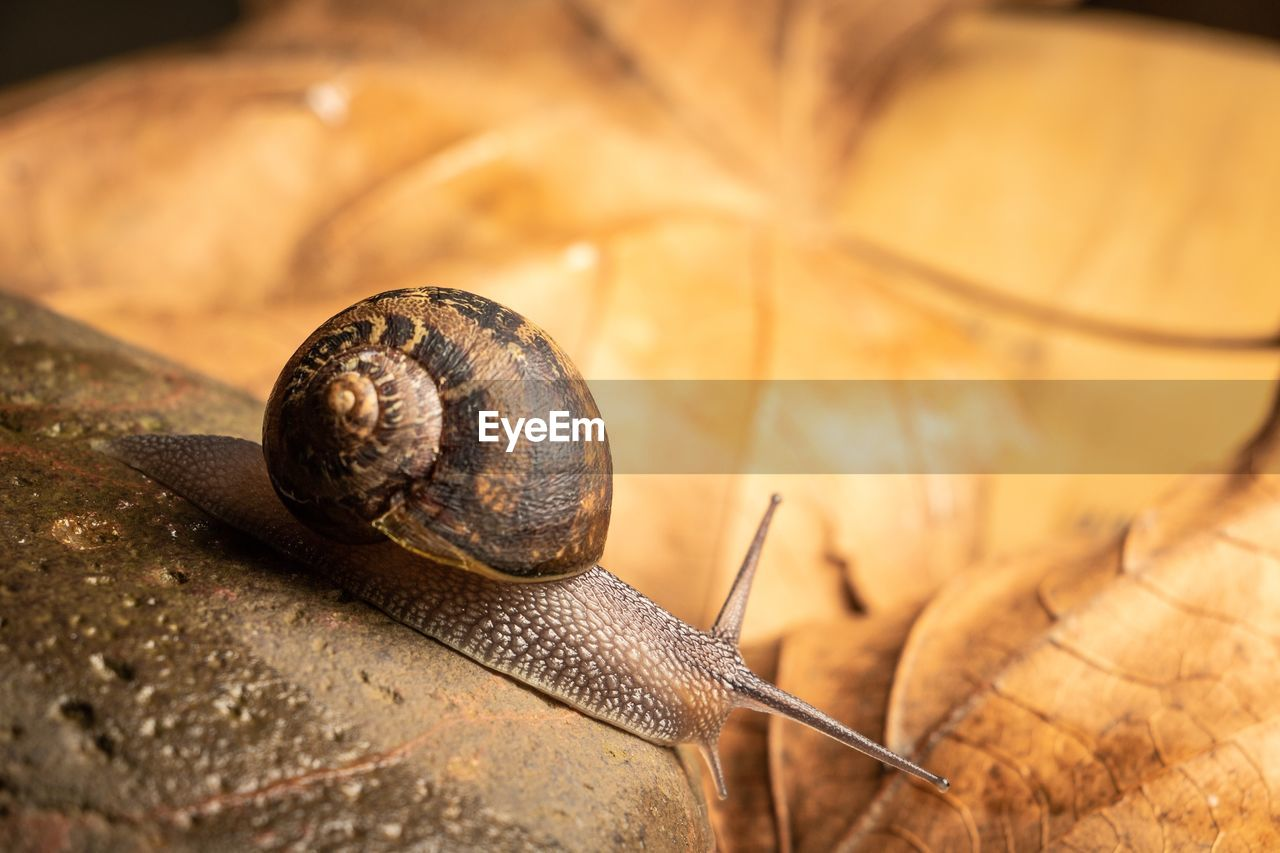 animal wildlife, shell, snail, animal, animal themes, gastropod, animal shell, mollusk, one animal, close-up, animals in the wild, invertebrate, no people, animal body part, selective focus, animal antenna, boredom, nature, brown, day