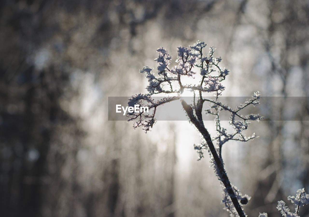 nature, tree, winter, beauty in nature, day, outdoors, fragility, no people, cold temperature, branch, focus on foreground, flower, growth, freshness, snow, close-up, sky
