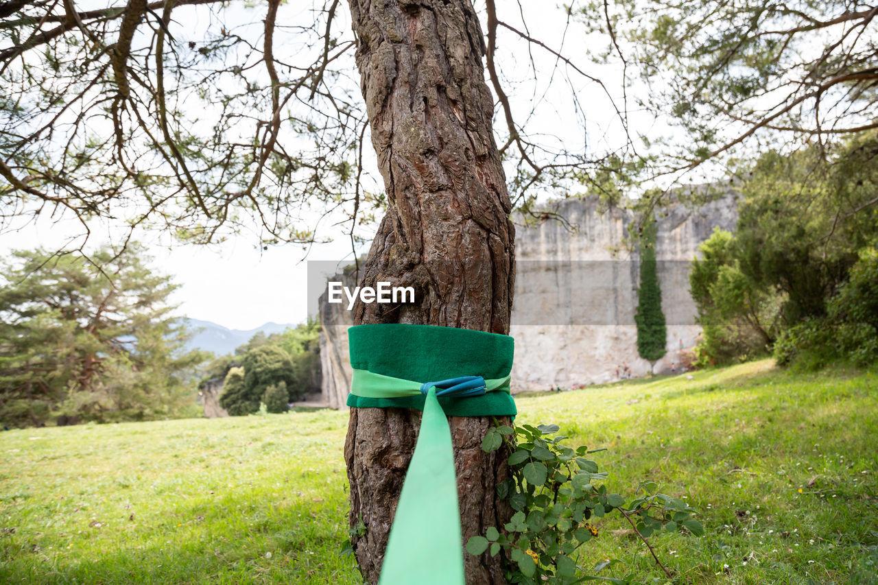 TREE TRUNK ON FIELD