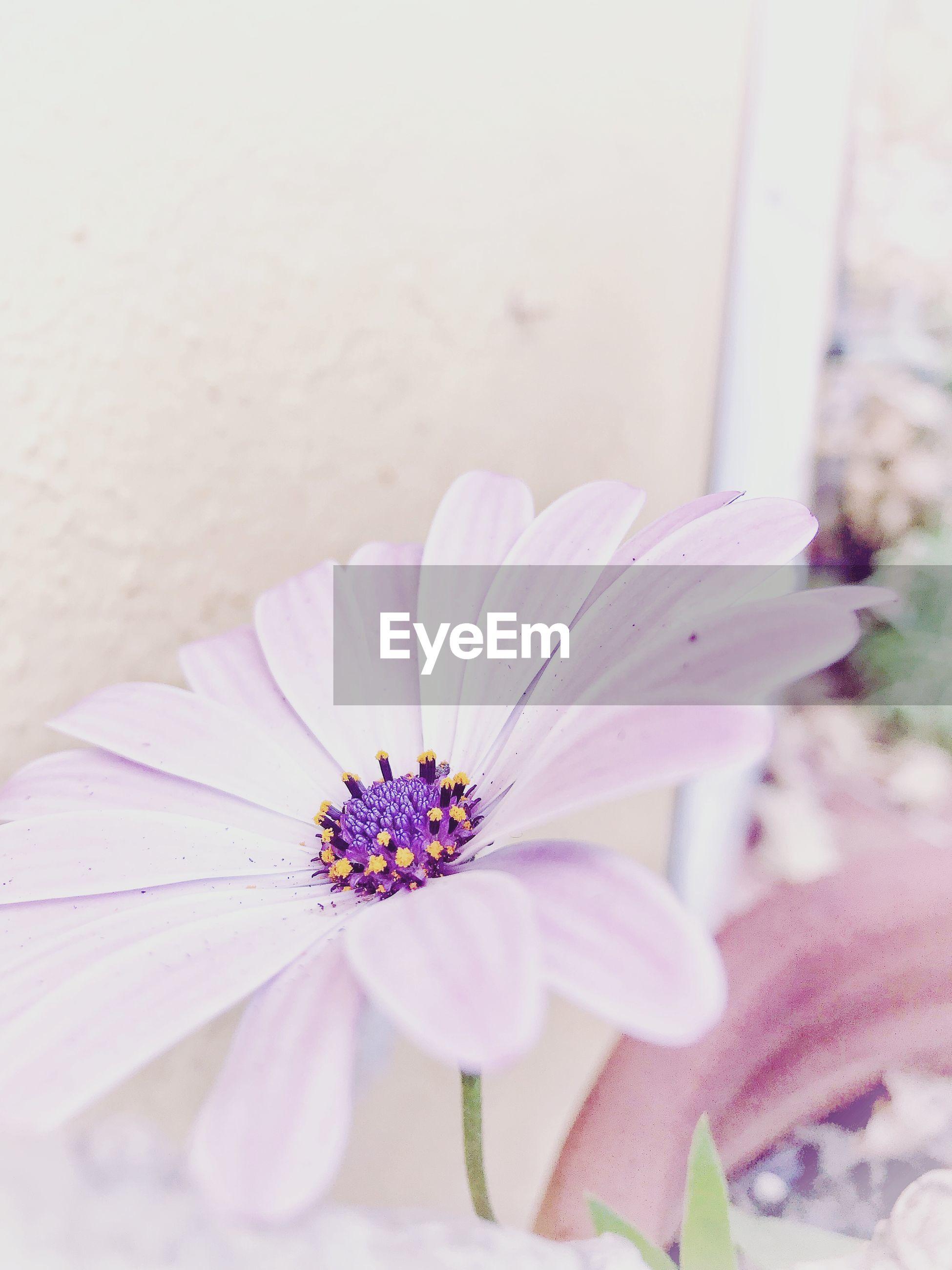 CLOSE-UP OF FLOWER POLLEN