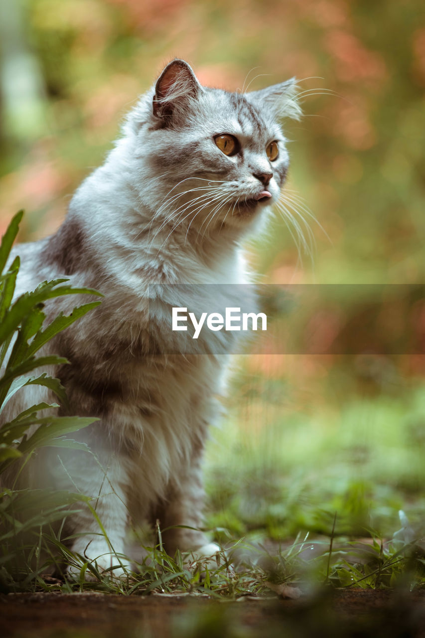 animal themes, one animal, animal, mammal, domestic, domestic cat, cat, domestic animals, pets, feline, looking away, vertebrate, no people, looking, plant, day, whisker, nature, focus on foreground, selective focus