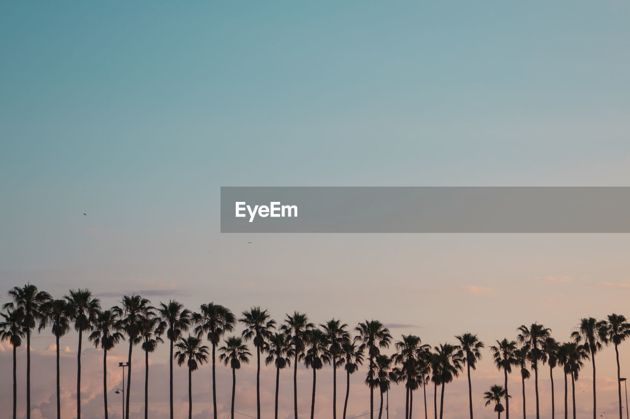 Palm Trees Against Clear Sky During Sunset
