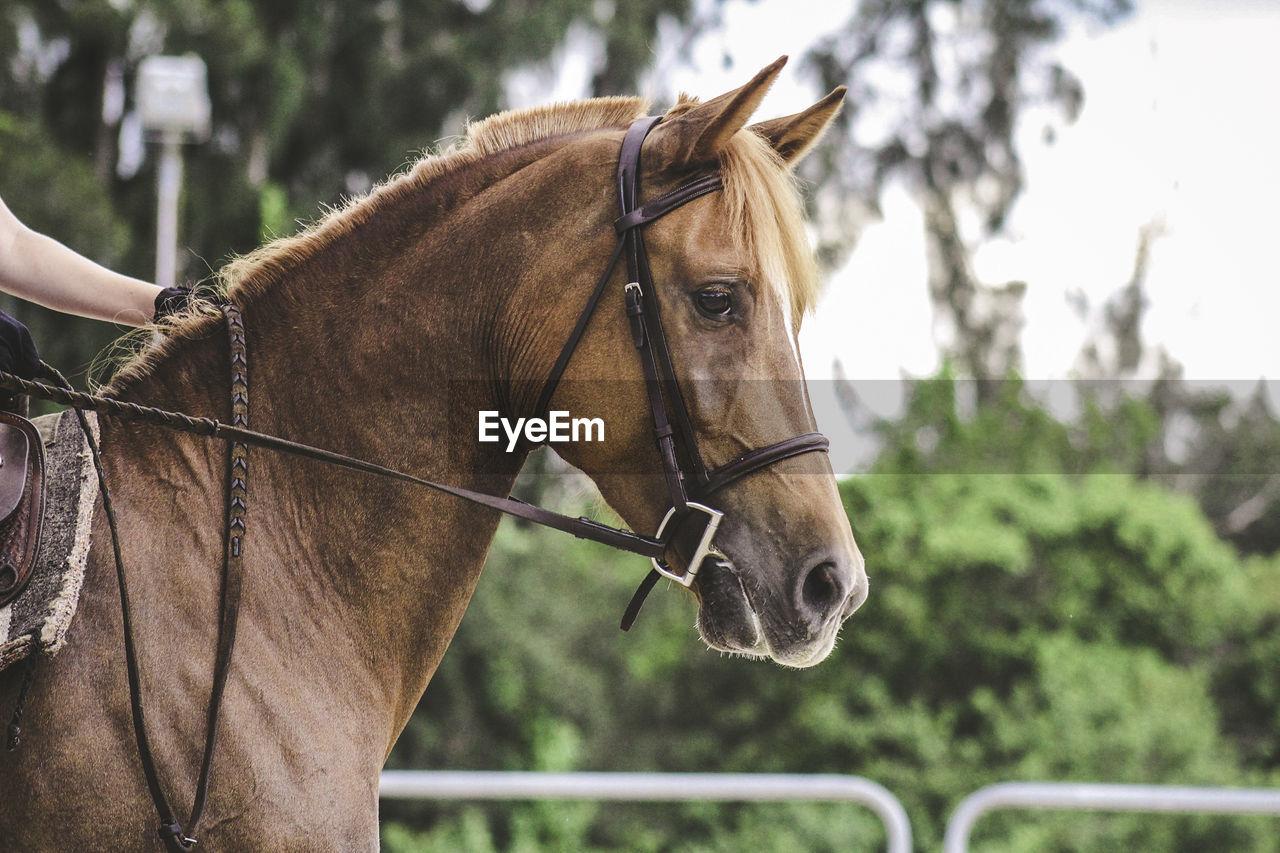 Profile View Of Horse In Farm