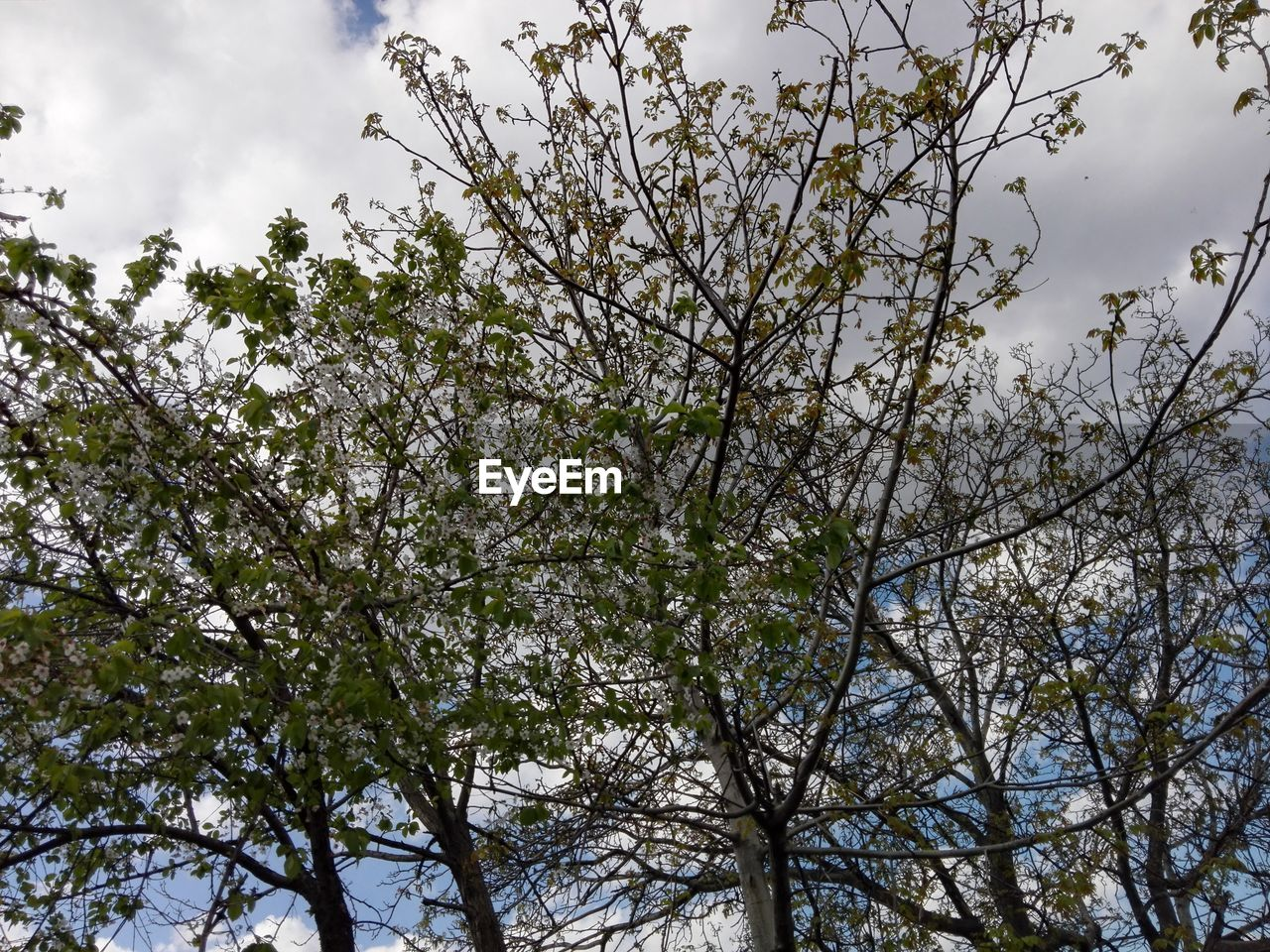 tree, branch, nature, growth, low angle view, flower, beauty in nature, sky, no people, outdoors, day, fragility, freshness, close-up