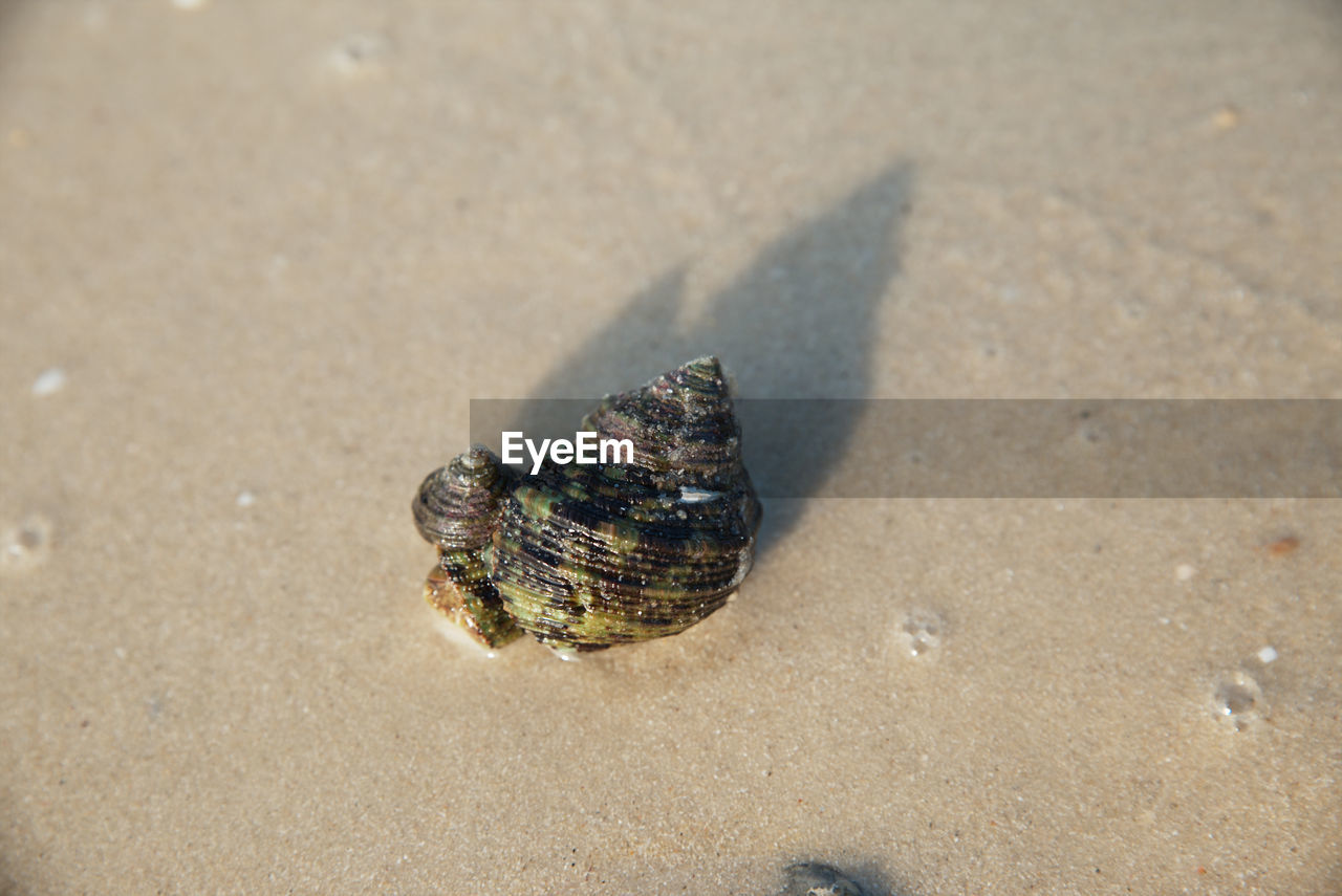 animal wildlife, animal, animal themes, animals in the wild, land, one animal, sand, beach, shell, nature, animal shell, day, sunlight, close-up, outdoors, no people, high angle view, sea, hermit crab, crab, marine