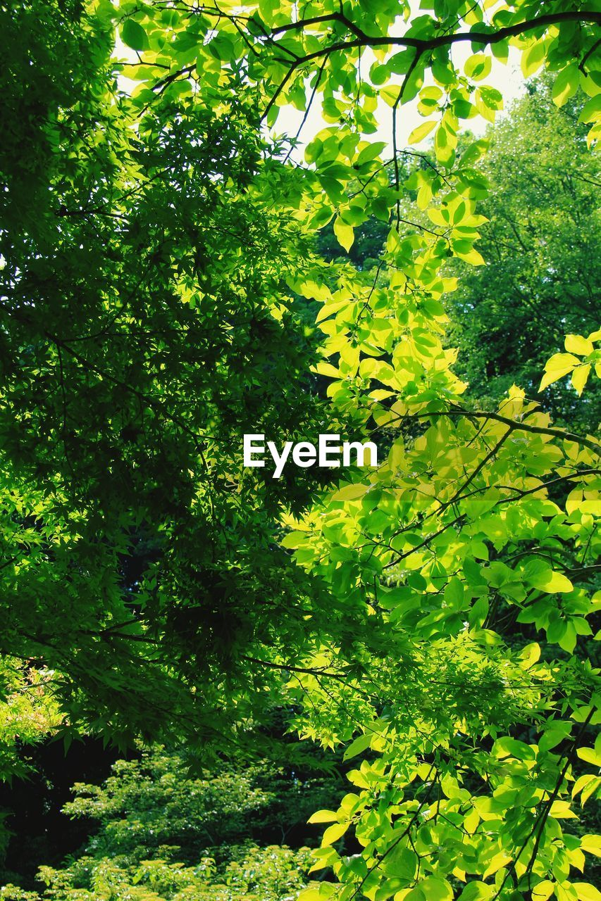 plant, growth, green color, tree, beauty in nature, nature, day, no people, leaf, plant part, tranquility, sunlight, outdoors, freshness, land, foliage, lush foliage, green, branch, forest