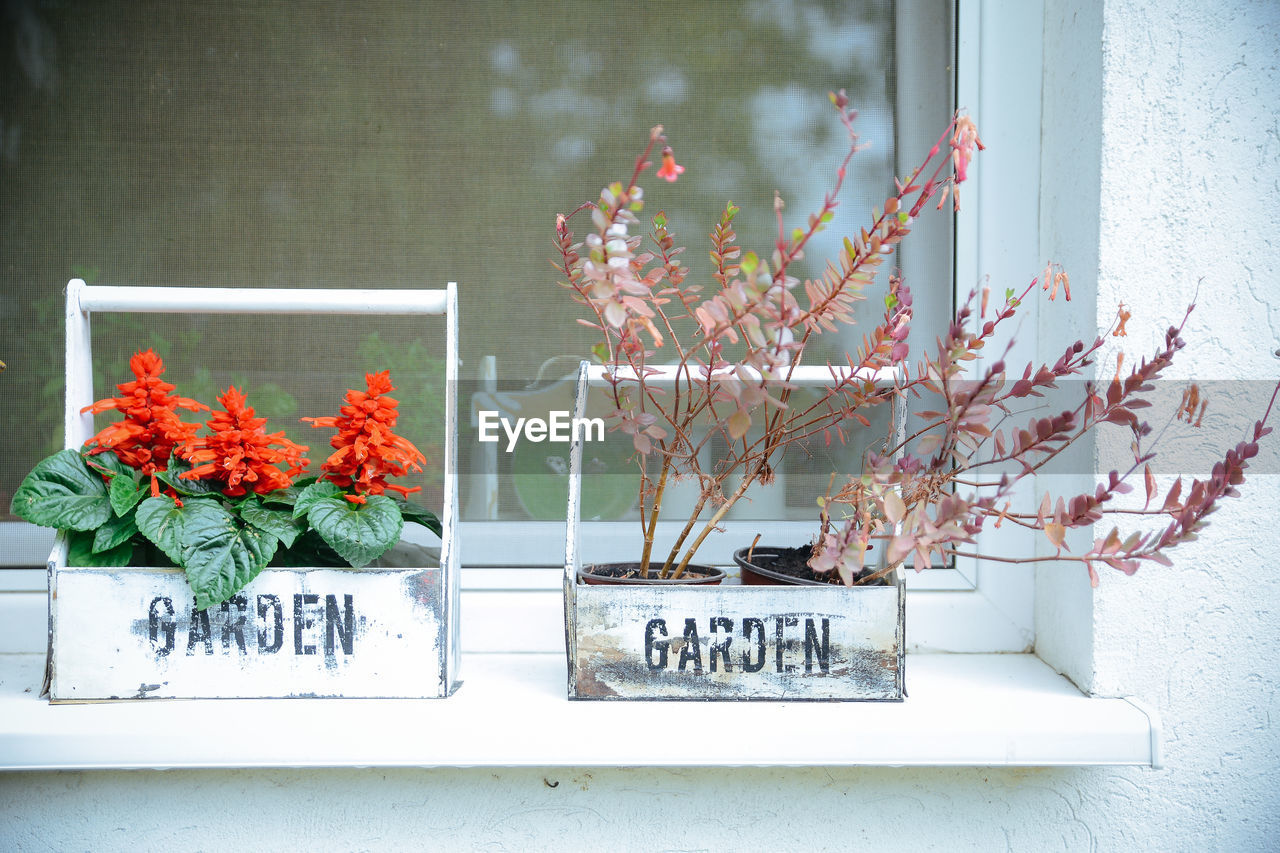 flower, window, day, no people, growth, plant, text, fragility, indoors, freshness, nature, architecture, flower head, close-up