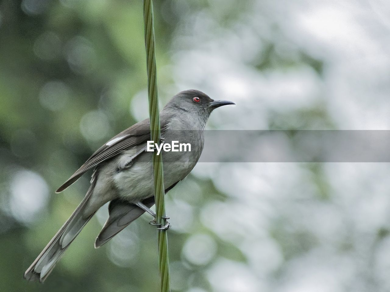 one animal, bird, animal themes, focus on foreground, animals in the wild, day, animal wildlife, outdoors, perching, no people, nature, close-up