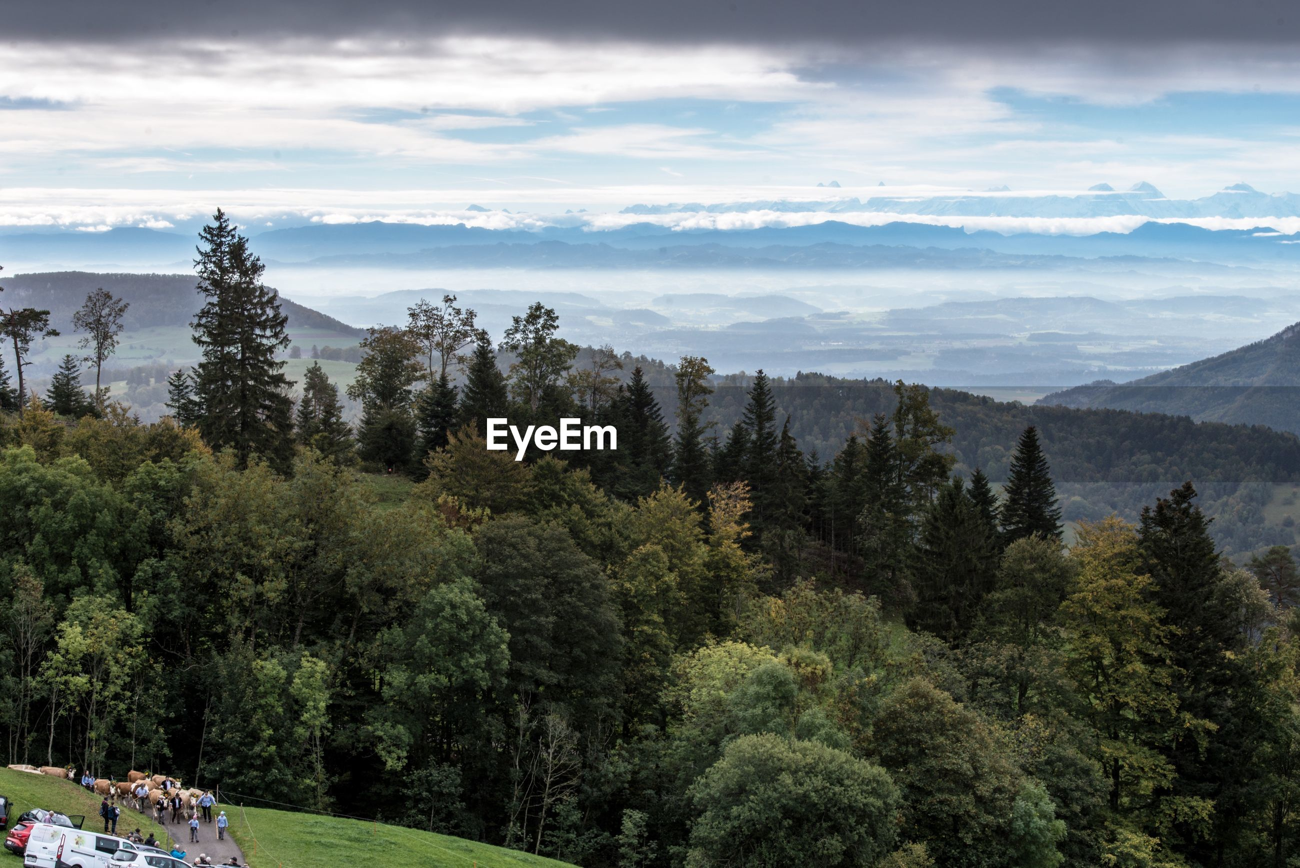 SCENIC VIEW OF TREES ON MOUNTAIN AGAINST SKY