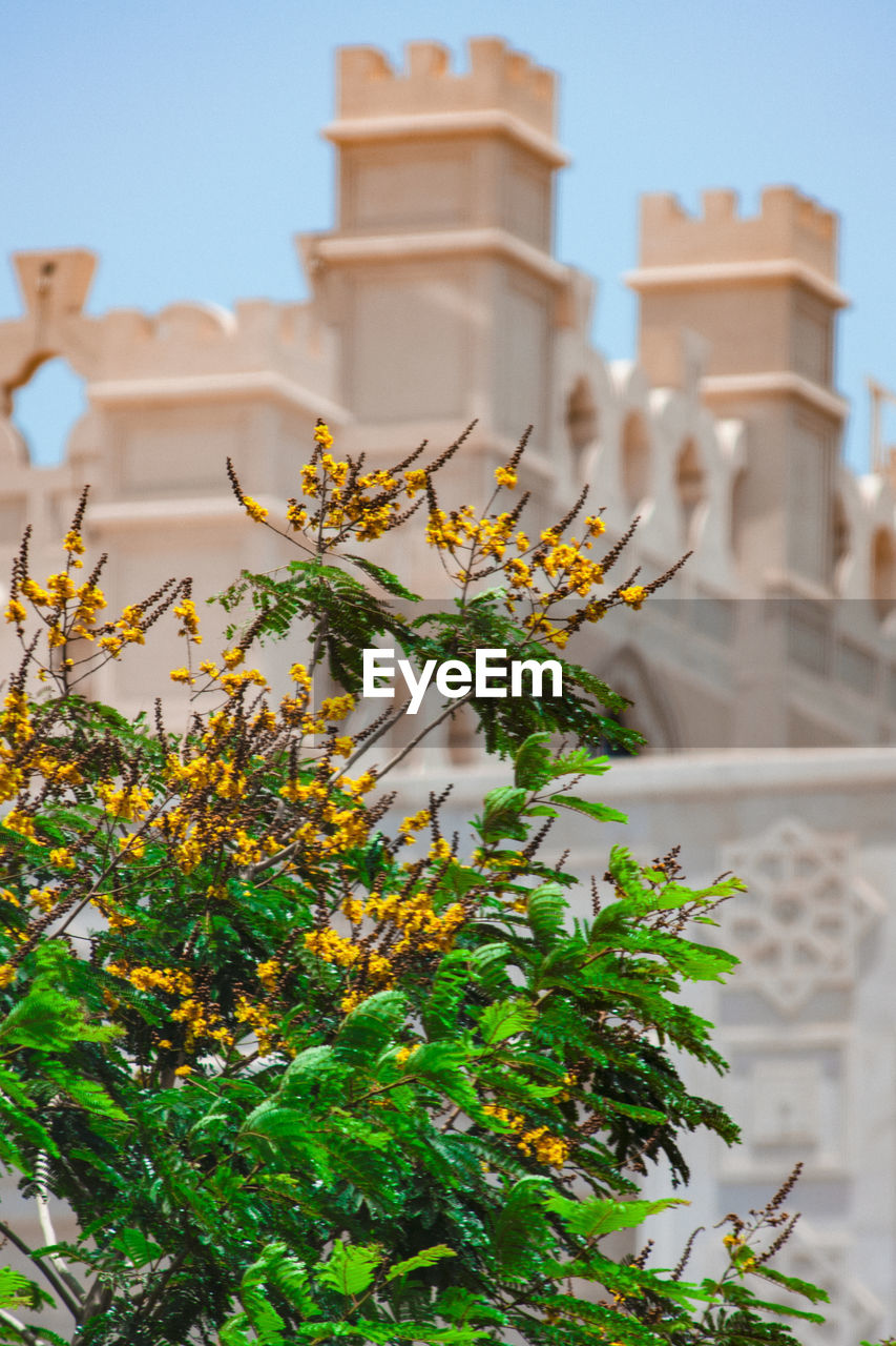 plant, architecture, built structure, nature, building exterior, focus on foreground, no people, growth, day, low angle view, religion, history, building, flower, the past, sky, belief, place of worship, flowering plant, freshness, outdoors