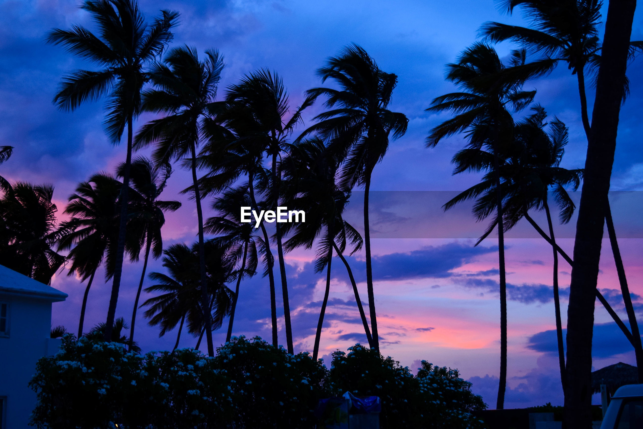 LOW ANGLE VIEW OF SILHOUETTE PALM TREES AT BEACH