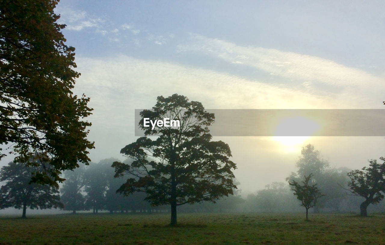 tree, sun, nature, sunbeam, beauty in nature, landscape, tranquility, tranquil scene, field, scenics, idyllic, bright, growth, fog, outdoors, no people, grass, sunlight, sky, sunset, day, branch