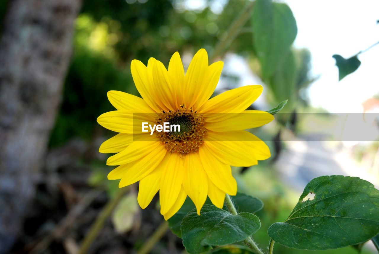 flowering plant, flower, petal, growth, plant, fragility, yellow, flower head, vulnerability, freshness, inflorescence, beauty in nature, close-up, focus on foreground, nature, day, plant part, pollen, leaf, no people, pollination