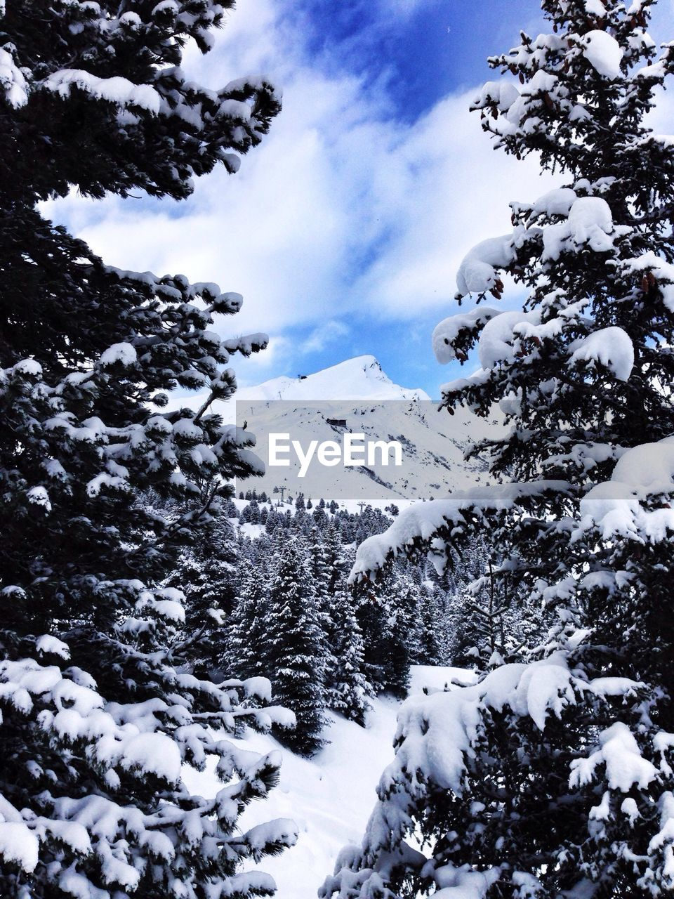 Trees in snow covered landscape
