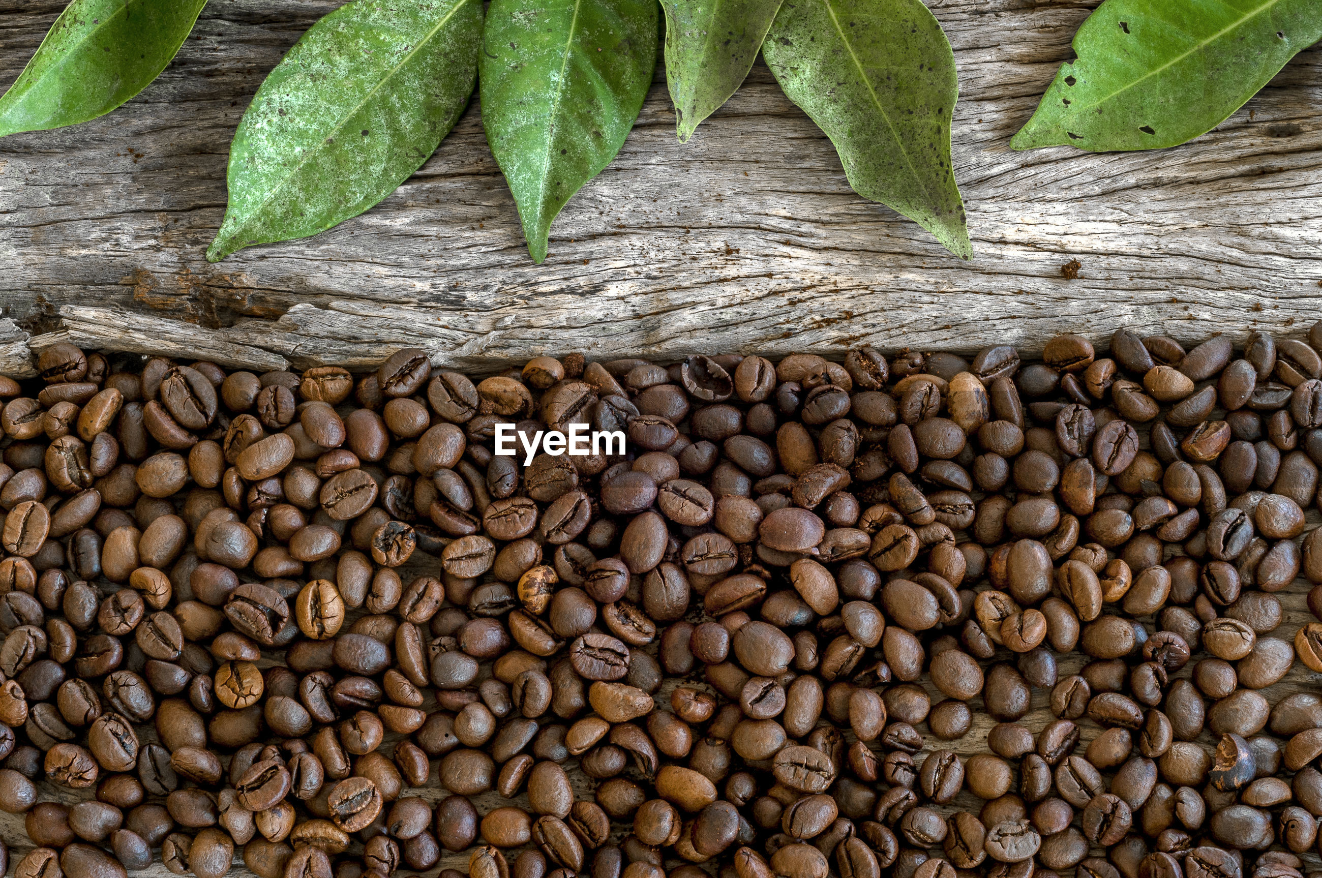 High angle view of coffee bean with leaves