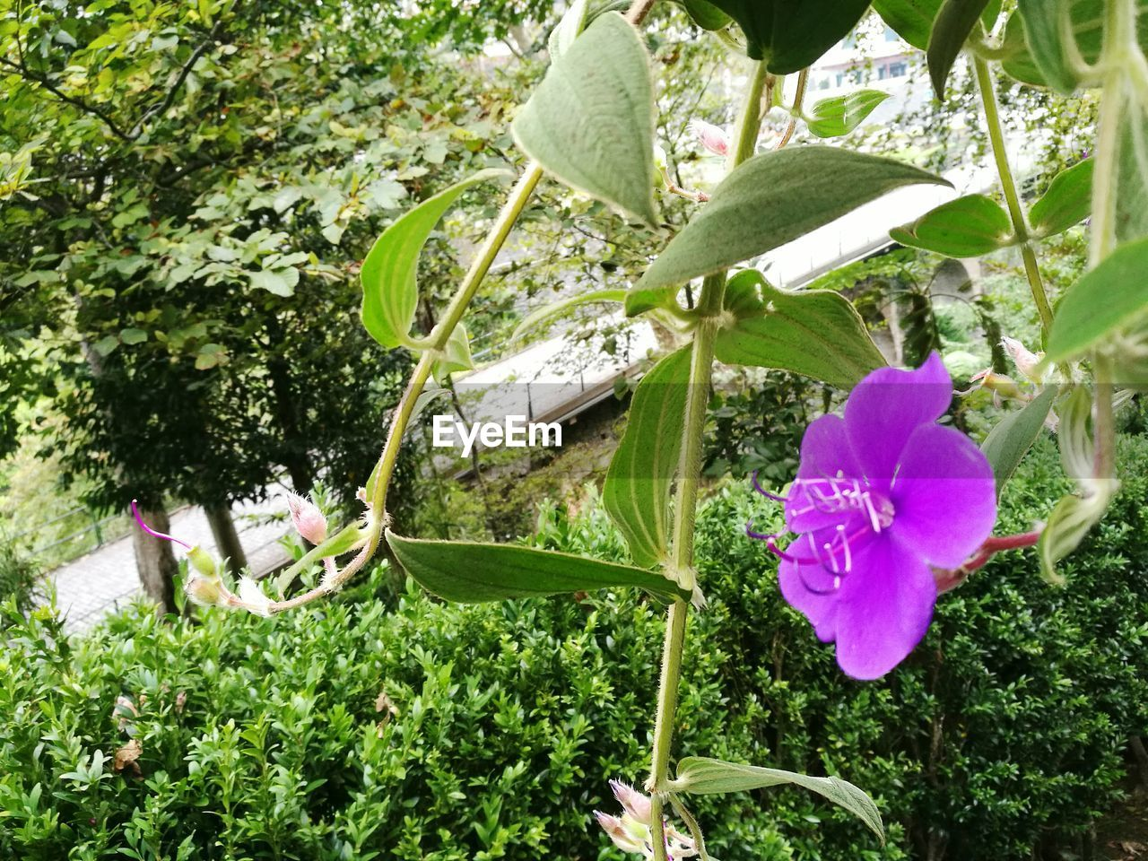flower, growth, plant, nature, leaf, beauty in nature, freshness, petal, day, outdoors, fragility, no people, green color, blooming, flower head, tree, close-up