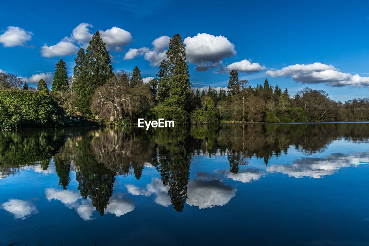 Reflection of trees on calm lake